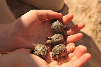 handful of hatchlings