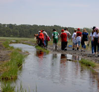 Students doing a program in the marsh at Wellfleet Bay Wildlife Sanctuary