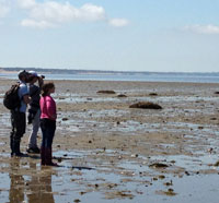Students on a tidal flats field trip with Wellfleet Bay Wildlife Sanctuary