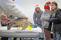 Students visiting cold-stunned sea turtles