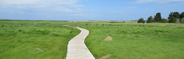 Boardwalk trail at Wellfleet Bay Wildlife Sanctuary © Victoria Bettuelli