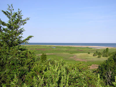 View of the marsh at Wellfleet Bay Wildlife Sanctuary © Lauren Fenn