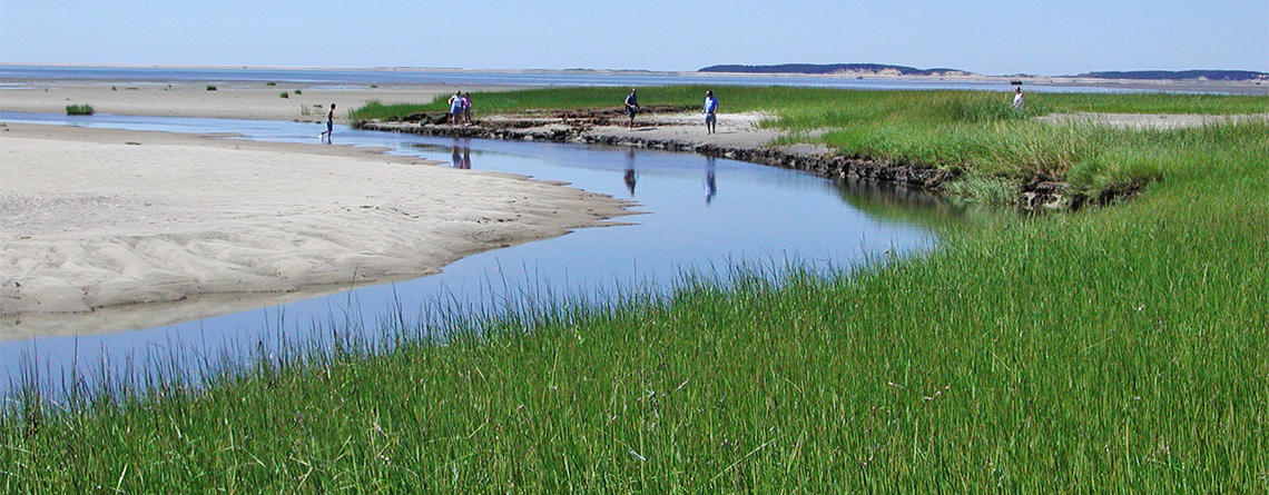 Volunteers in the marsh at Wellfleet Bay Wildlife Sanctuary