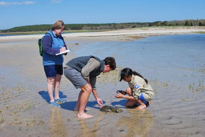 WB researchers tagging horseshoe crabs