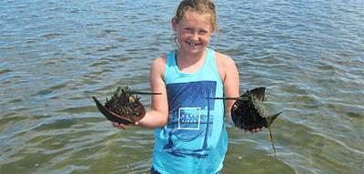 Wellfleet Bay camper with two Horseshoe Crabs