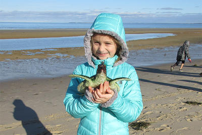 Whiteley student holding a model of a sea turtle