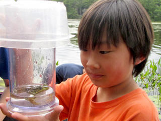 Herp hunt - boy looking at a frog