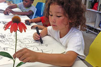 Young child drawing a coneflower from real specimen at MABA