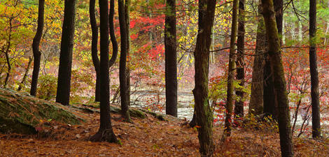 forest at Mass Audubon Broadmoor Wildlife Sanctuary © Art Donahue
