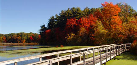 Stoney Brook boardwalk in seasonal glory (note: boardwalk is closed for repairs)