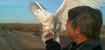Snowy Owl Project - spring/summer