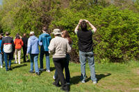 Birding in spring at Broadmoor Wildlife Sanctuary