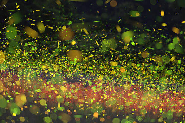 Swirling cluster of fireflies © Jonathan McElvery