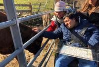 Visitor with sensory needs pets a cow at Drumlin Farm