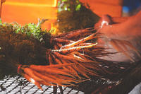 Carrots from Drumlin's Fall CSA