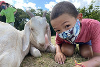 Drumlin Farm camper wearing a face mask sitting next to a goat