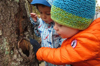 Preschoolers examining a tree cavity in late fall at Felix Neck Wildlife Sanctuary