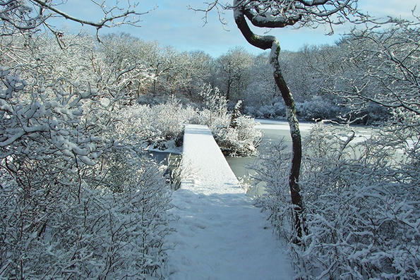 Pond boardwalk trail in winter at Felix Neck Wildlife Sanctuary