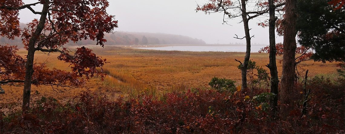 Great Neck Wildlife Sanctuary in late fall © Richard Johnson
