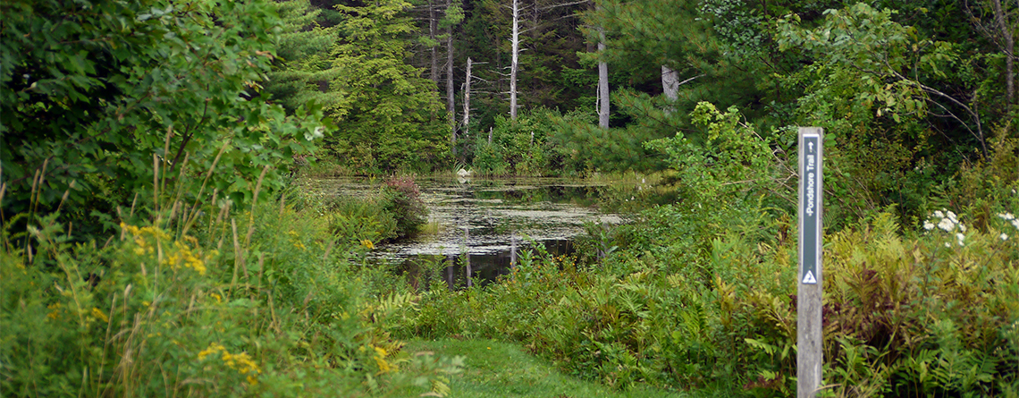 Pond at Lake Wampanoag Wildlife Sanctuary