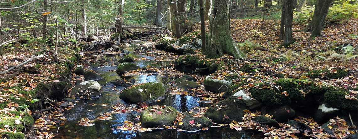 Lyman Brook at Lynes Woods Wildlife Sanctuary