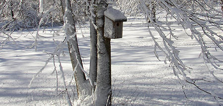 Nestbox in a field of snow at Moose Hill Wildlife Sanctuary.
