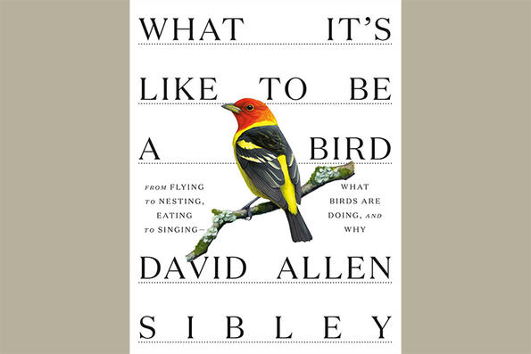 "Cover of ""What It's Like to Be a Bird"" by David Sibley © Knopf"