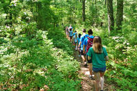 Campers exploring a trail in the woods at North River Nature Day Camp
