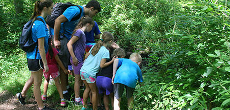 Campers exploring a stream at Oak Knoll Summer Camp