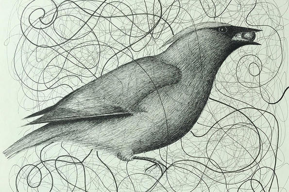 Cedar Waxwing pen & ink drawing © Morgan Burns