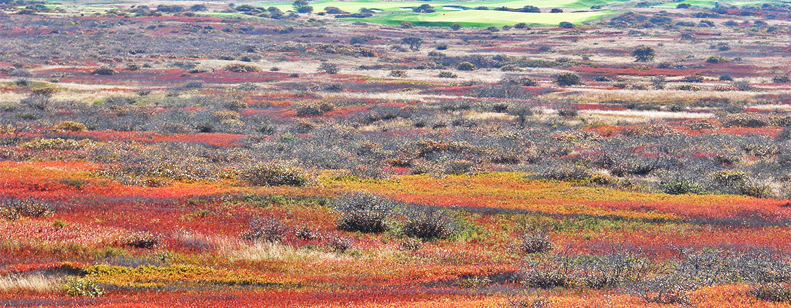 Sesachacha Heathlands (Photo: Robert Buchsbaum)