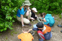 Stony Brook campers examine soil for critters