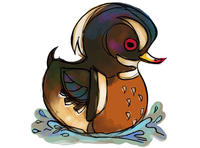 Stony Brook Wildlife Sanctuary's Wood Duck Derby