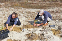 Planting sandplain plant species at Tidmarsh Wildlife Sanctuary