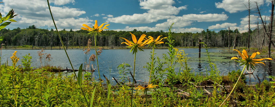 Flowers and pond at Waseeka Wildlife Sanctuary © Chris Ruggiero