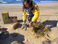 Sea Turtle Rescue Season on Cape Cod