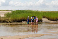 Wellfleet Bay campers exploring a salt marsh with their counselor