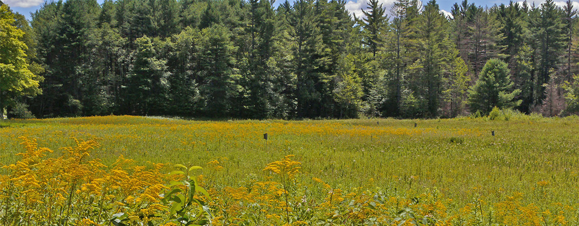 Goldenrod field at West Mountain Wildlife Sanctuary © Richard Johnson