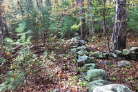 Stone walls & forest on the now-protected McLarey property in Marshfield
