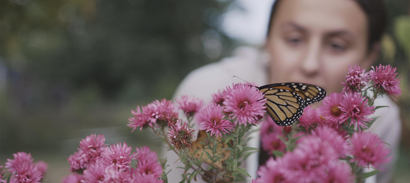 Girl watching Monarch butterfly on aster flowers