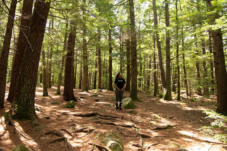 Person standing among the trees at Wompatuck State Park in Hingham, MA © Siya Gunda