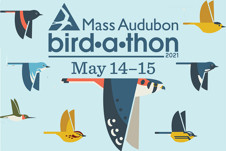 Bird-a-thon 2021 banner featuring multicolor, illustrated birds