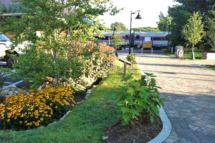 A rain garden installed at a MetroWest MBTA Commuter Rail station © Trish Garrigan