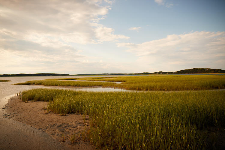 Salt marsh at Wellfleet Bay Wildlife Sanctuary