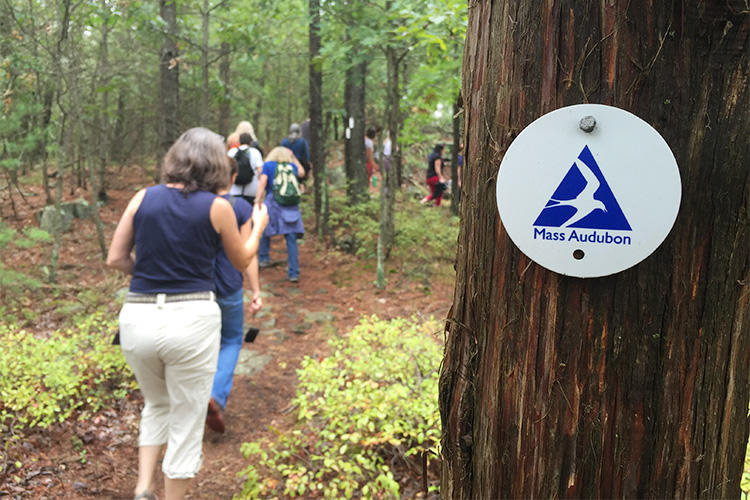 A guided hike on one of Mass Audubon's many trails