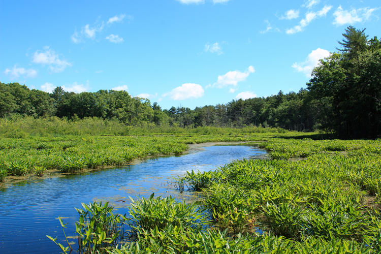 River winding through green marsh